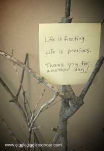 life is precious photo